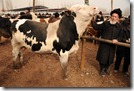 Marché aux bestiaux de Kashgar