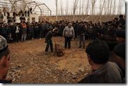 Marché aux bestiaux de Kashgar, combats de chiens